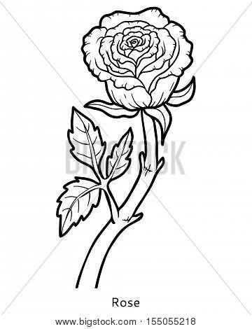 Coloring book for children, colorless flower Rose