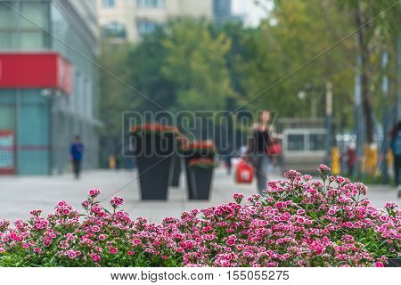 Isolated bent down city streets and flower beds