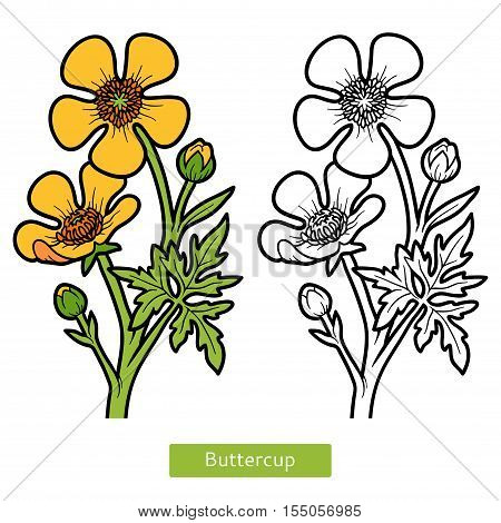 Coloring book for children, yellow flower Buttercup