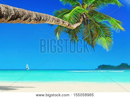 Perfect tropical white sandy coconut palm beach Baie Lazare and yacht under sail Mahe island Seychelles gem of the Indian Ocean