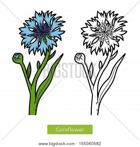 Coloring book for children, coloring page, flower Cornflower
