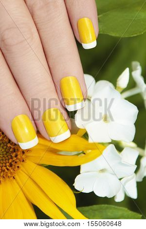 Short yellow French manicure with sunflower and white Phlox.