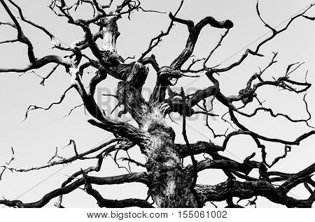 Abstract nature background - black and white tree