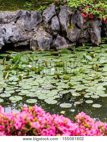 Pink azaleas and lily pads on lake