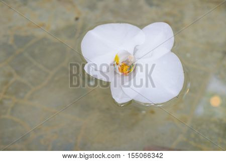 White orchid flower on water - Stock Photo
