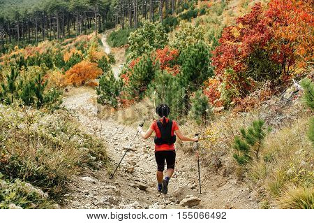 young woman traveler and nordic walking stick descend from mountain trail. red and yellow leaves of autumn forest
