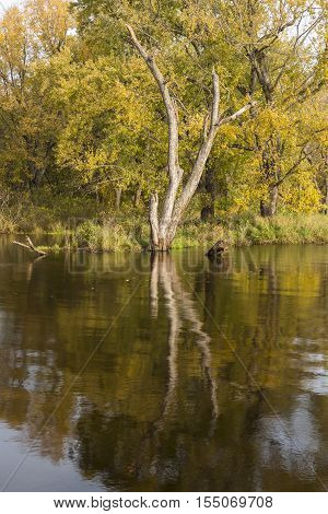 The backwaters of the Mississippi River during autumn.