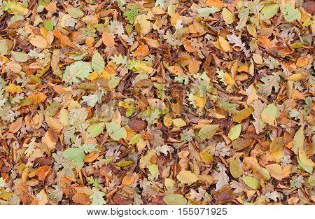 fallen orange autumn foliage abstract texture background