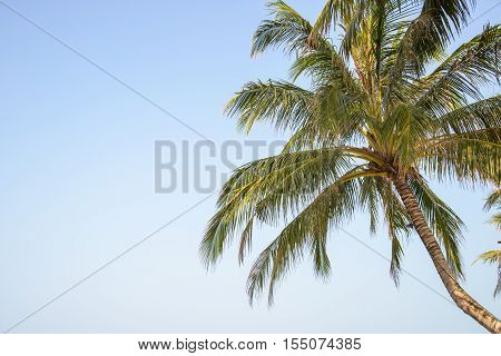 coconut leaf on blue sky - Stock Photo
