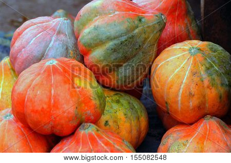 Bright Pumpkins in the Autumn harvest for sale
