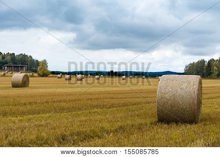 Autumn view of a large hay field that have been harvested large bales of hay spools left on the bright yellow field.