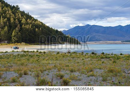 Yellow Flowers Grown By Lakeside At Lake Tekapo, South Island Of New Zealand