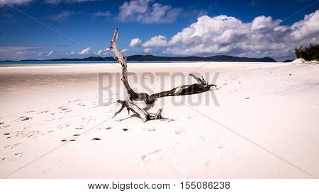 A tree trunk is sitting on white sand on a wide beach at Whitehaven beach, Whitsunday Island, QLD Australia.