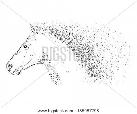vector - horse head - isolated on background
