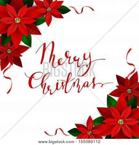 Christmas decoration on white Poinsettia with ribbons with handwritten Merry Christmas Vector