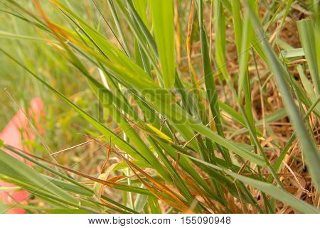 Grass in a field in early autumn