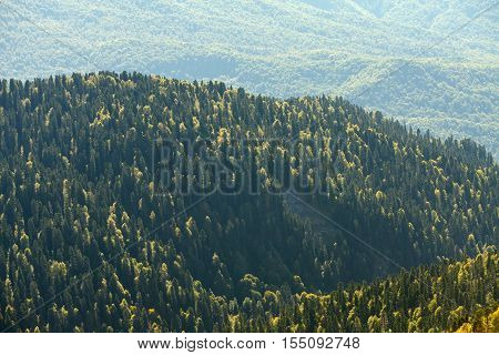 Mountain forrest, autumn, Sochi, Rosa Khutor resort