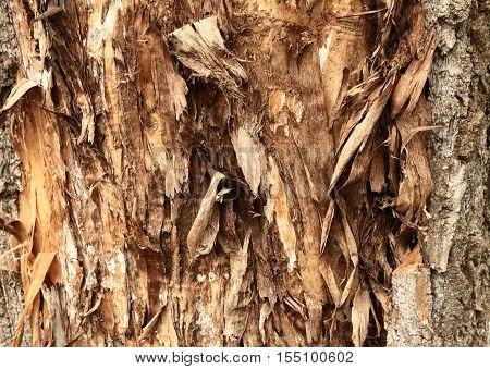 choppy weather -beaten cracking bark texture background