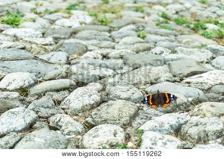 A beautiful colorful butterfly standing on a base of grey stones - Concept about nature