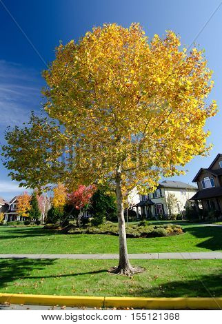 Sunny Morning In Seattle Suburb During Fall Season