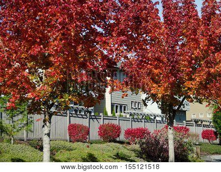 Red Foliage Flooding Suburb