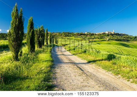 Country road leading to Pienza Tuscany, Italy