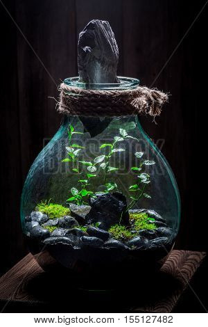 Amazing Rain Forest In A Jar With Self Ecosystem