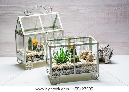 Small Live Cactus In A Small Terrarium
