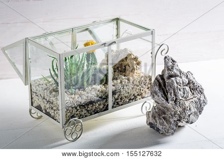 Small Terrarium With Live Cactus And Self Ecosystem