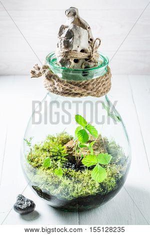 Beautiful Rain Forest In A Jar, Save The Earth Idea