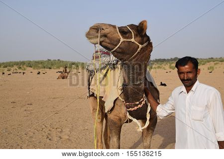 JAISALMER, RAJASTHAN, INDIA - FEBRUARY 12, 2016 - Unidentified indian man with his camel in Thar desert