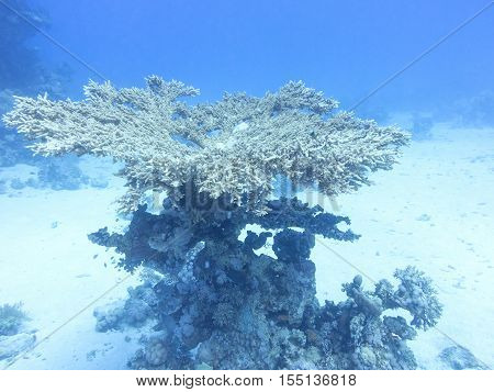 Coral reef at the bottom of tropical sea underwater