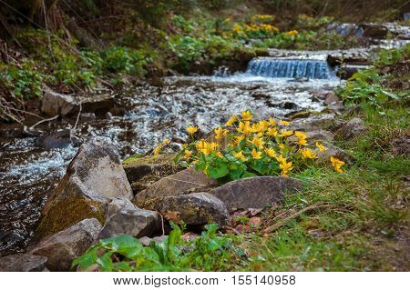 The picturesque mountain stream with bright yellow and orange flowers on the beach. Little Falls. The mountains