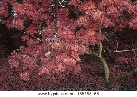 Stunning Alternate Vibrant Colorful Forest Landscape Tree Conceptual Image