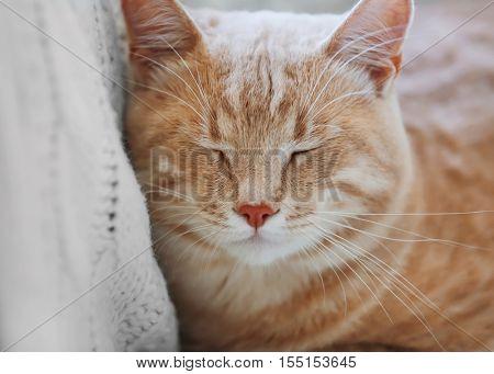 Cute cat on coach