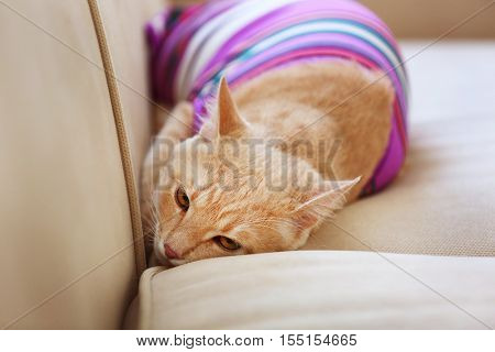 Funny cat in clothes on coach
