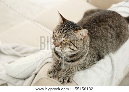 Grey tabby cat lying on backrest