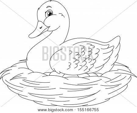 Duck sitting on eggs in nest, coloring page