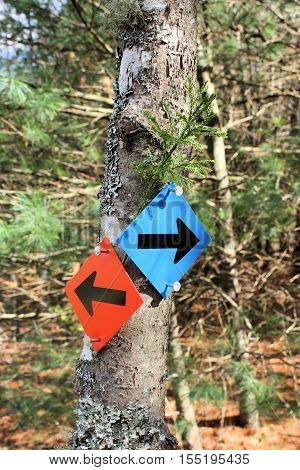Signs on a hiking trail saying red trail to the left and blue trail to the right.