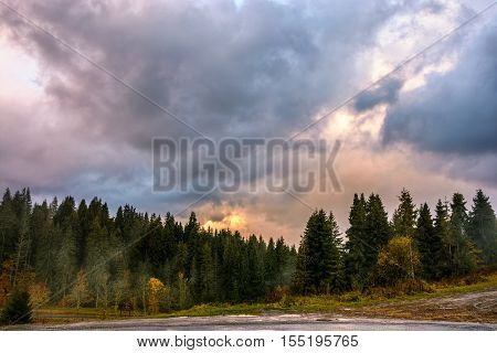 Autumn Spruce Forest In Mountains
