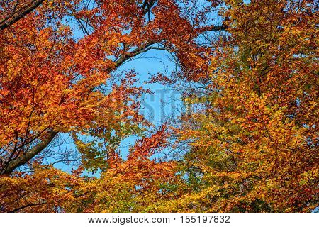 Forest With Colorful Foliage On Sunny Autumn Day