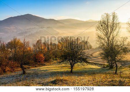 Autumn Forest On Hillside In Fog