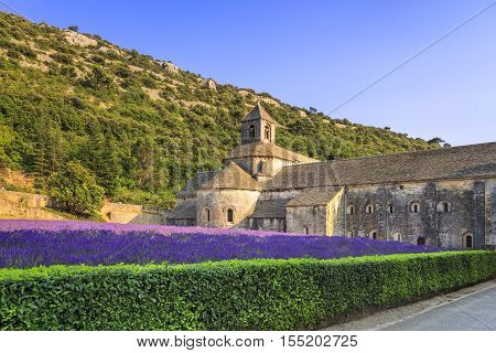 Abbey of Senanque and blooming rows lavender flowers on sunset. Gordes Luberon Vaucluse Provence France Europe.