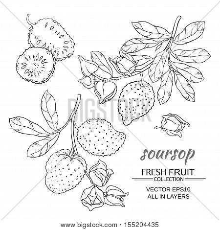 soursop branches vector set on white background