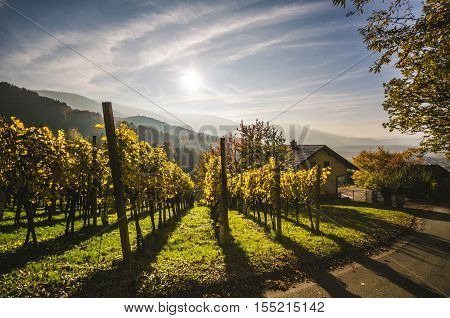 Vineyard, mountains, roof of house in Ruse, Slovenia