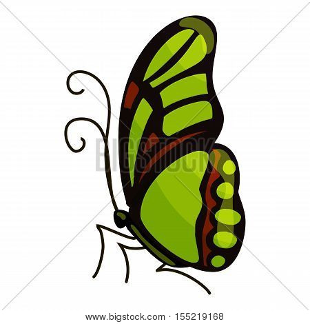 Green butterfly icon. Cartoon illustration of green butterfly vector icon for web