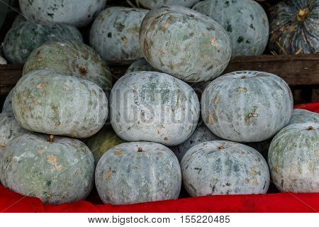 Winter Melon White Gourd Winter Gourd Ash GourdBenincasa hispida