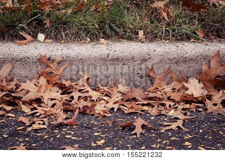 A pile of oak leaves is blown up against a curb on a windy autumn day.