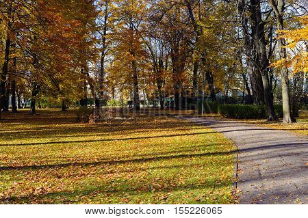 Beautiful autumn park. Autumn in Riga. Autumn trees and leaves. Autumn Landscape.Park in Autumn. Forest in Autumn. poster