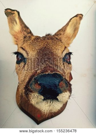 mounted taxidermy deer head hunting trophy antique